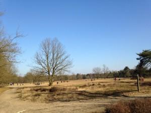 Heide-veen in de Kesselse Heide