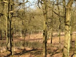 Bos en ven Kesselse Heide