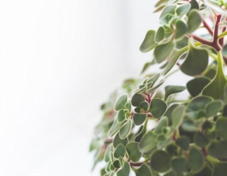 Stress? Haal een kamerplant in huis !