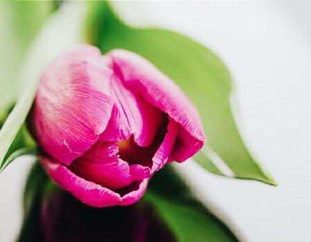Interieur Hollandse Tulpen : Interieur archives pagina van mamaexpert