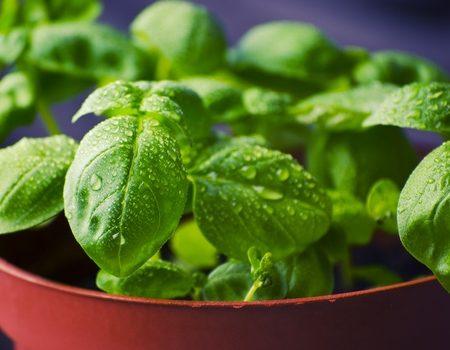 Zeven groenten waaruit je eeuwig kan kweken