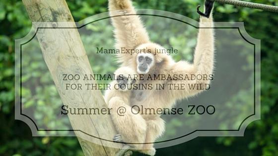 Elk diertje zijn pleziertje in de Olmense Zoo