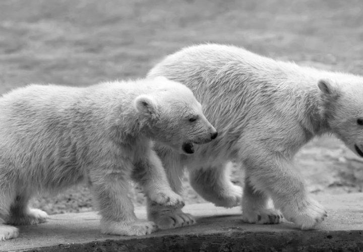 Papa, er zit een ijsbeer onder mijn bed!