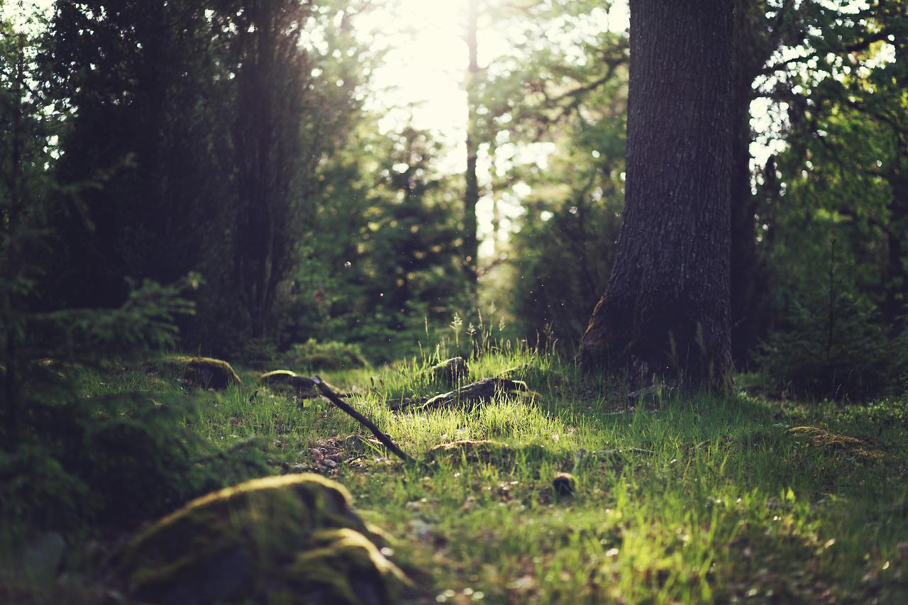Sporten in de Vlaamse bossen