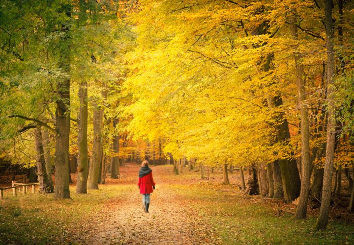 """""""40 % van de mensen heeft last van herfstmoeheid"""": 23 beproefde tips tegen najaarsdips"""