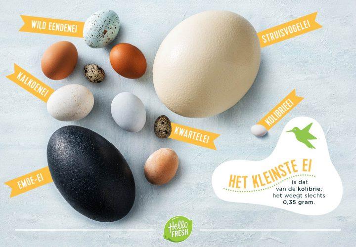 Ei, ei, ei! Bij Pasen hoort een ei!