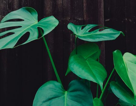 Start to kamerplant: Een kamerplant kopen