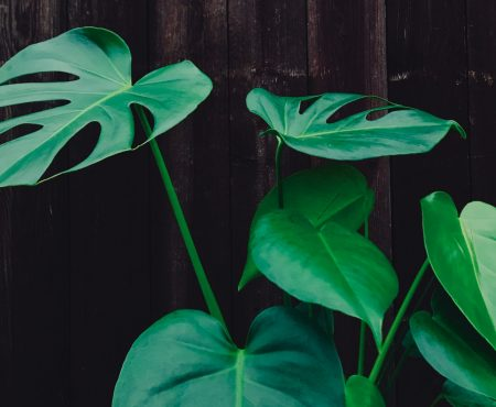 Starten met kamerplanten? Voor je naar de winkel gaat, moet je dit weten: licht en temperatuur