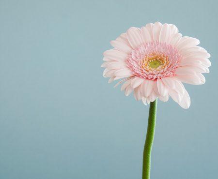 5 fantastische dingen om te doen in de lente, als je thuis zit door corona